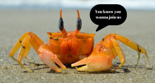 Crab saying you know you wanna join us